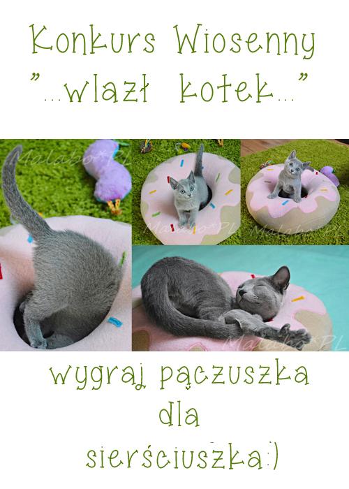 kotki w pączkach_malabo1