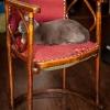 Renowacja krzesła (cz. 1)